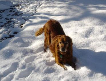 Dixie_snow2