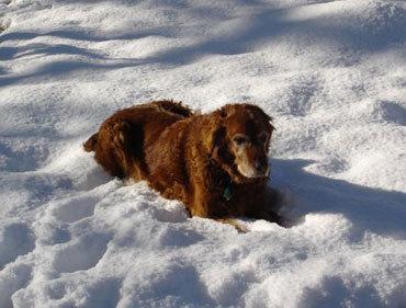 Dixie_snow3