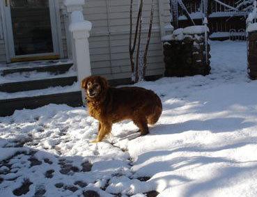Dixie_snow4